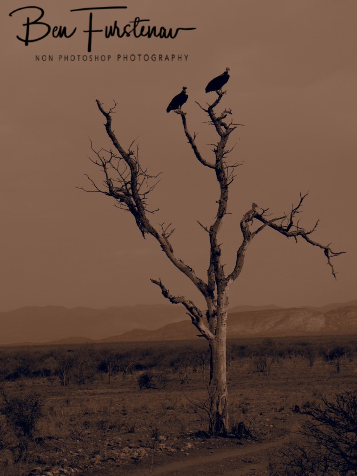 Arid desert land, Sophienhof, Outjo, Namibia