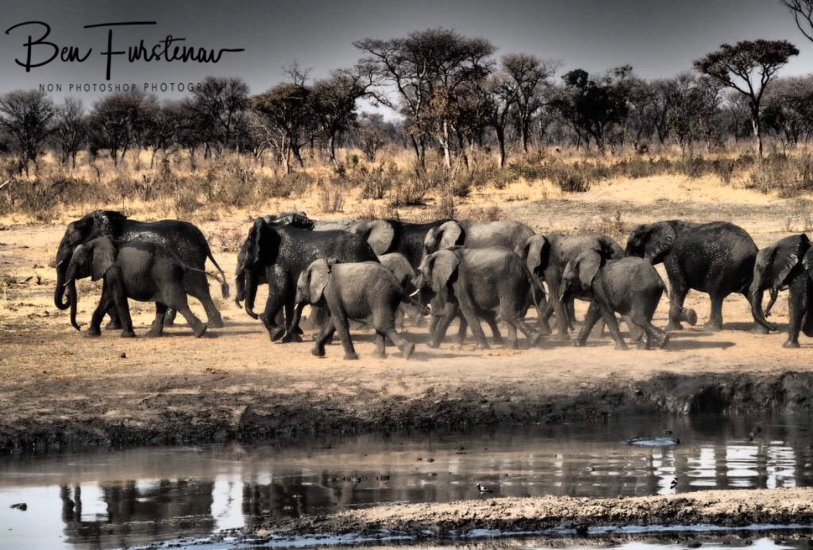 Elephants on the move, Khaudum National Park, Namibia
