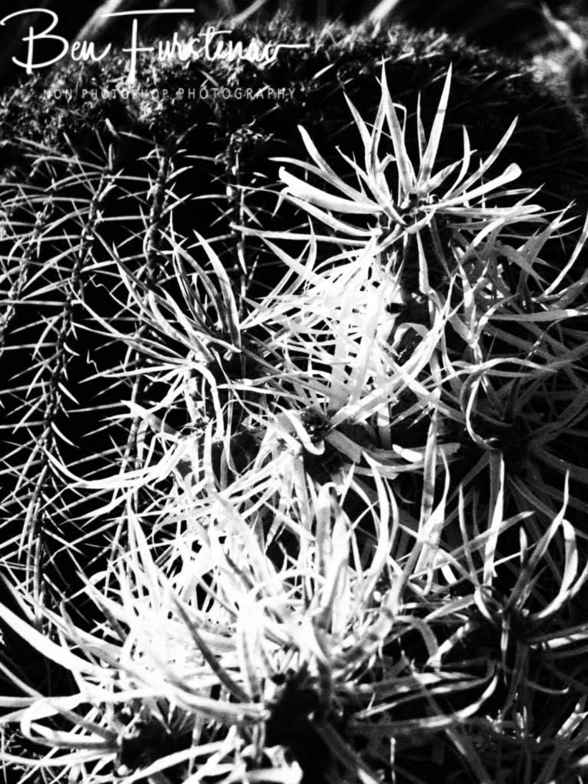 Different shapes in black and white, Brandberg Mountains, Namibia