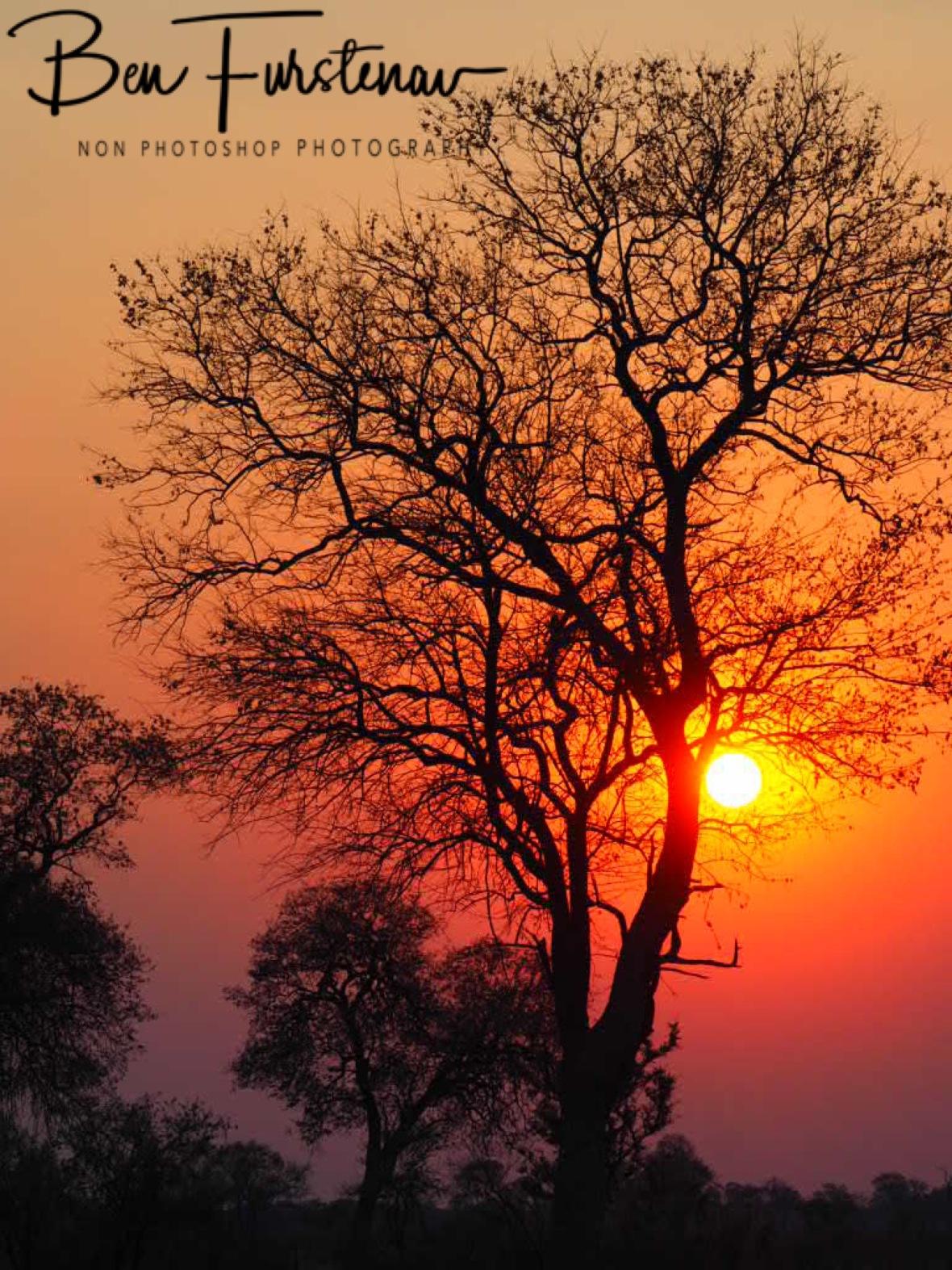 Orange glow over the Kalahari Desert, Khaudum National Park, Namibia