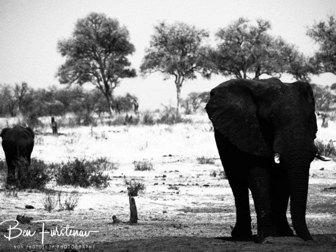 Elephants come and go, Khaudum National Park, Namibia