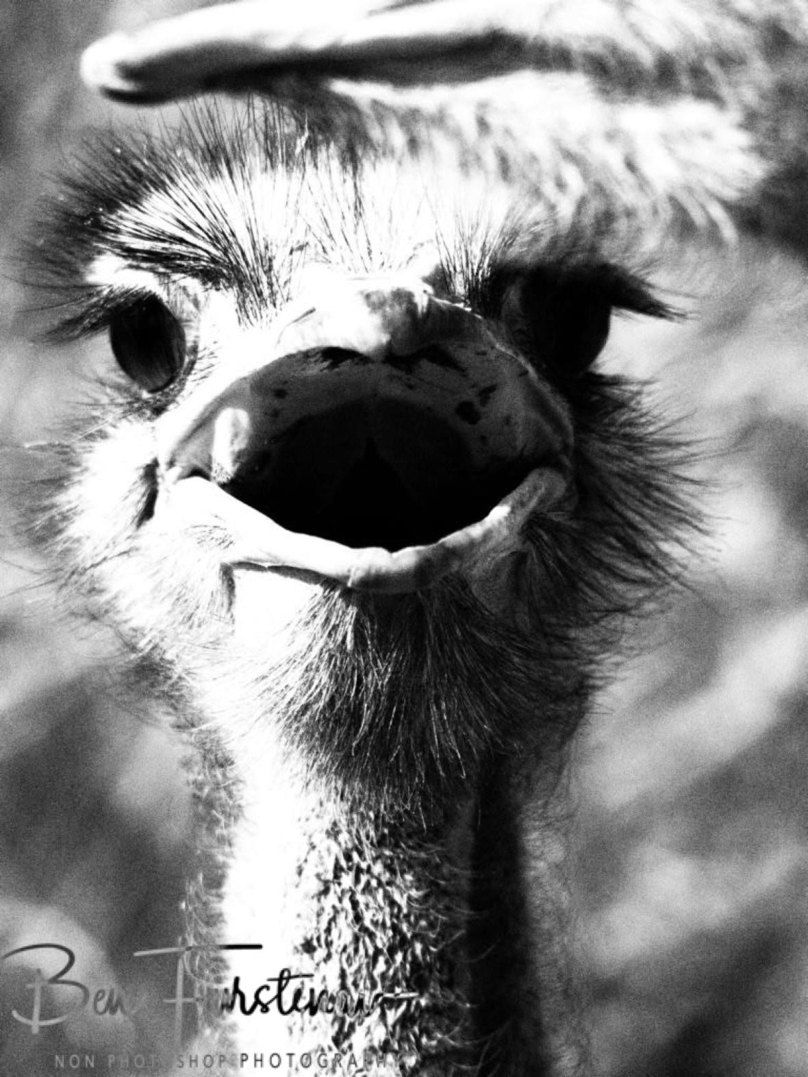 Looking cute, Oppi Koppi, Kamanjab, Namibia