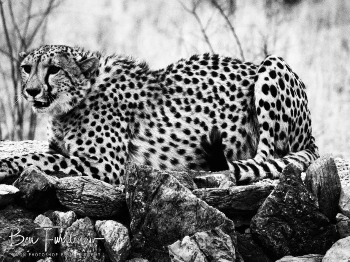 Submissive behaviour, Sophienhof, Outjo, Namibia