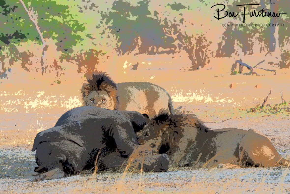 Feasting brothers in painting, Khaudum National Park, Namibia