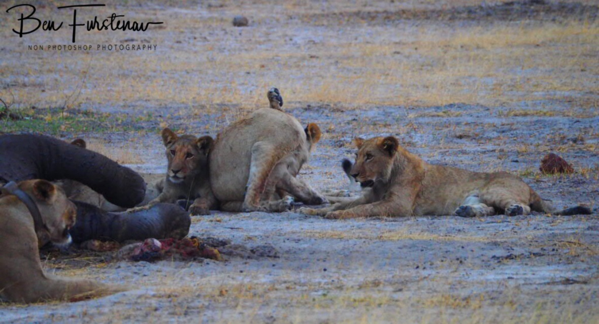 Youngsters entertaining themselves, Khaudum National Park, Namibia