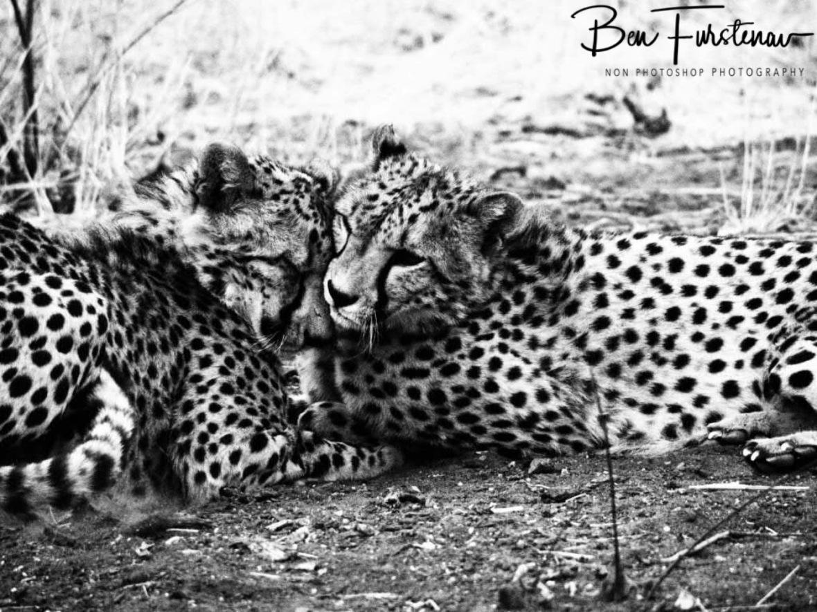 Kitty and Kibi, Sophienhof, Outjo, Namibia