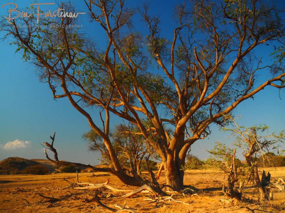 Spectacular mix off lush and greens, Damaraland, Namibia