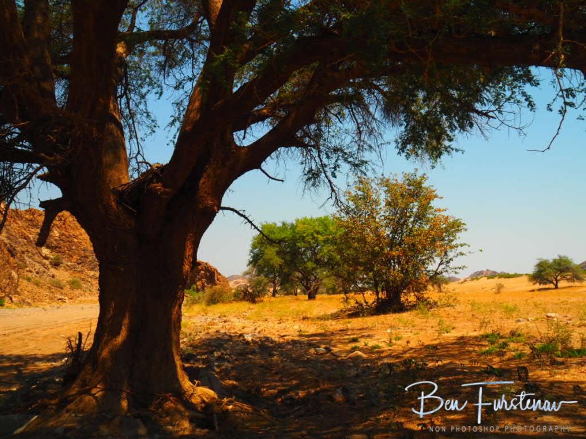 Sun sheltered view, Damaraland, Namibia