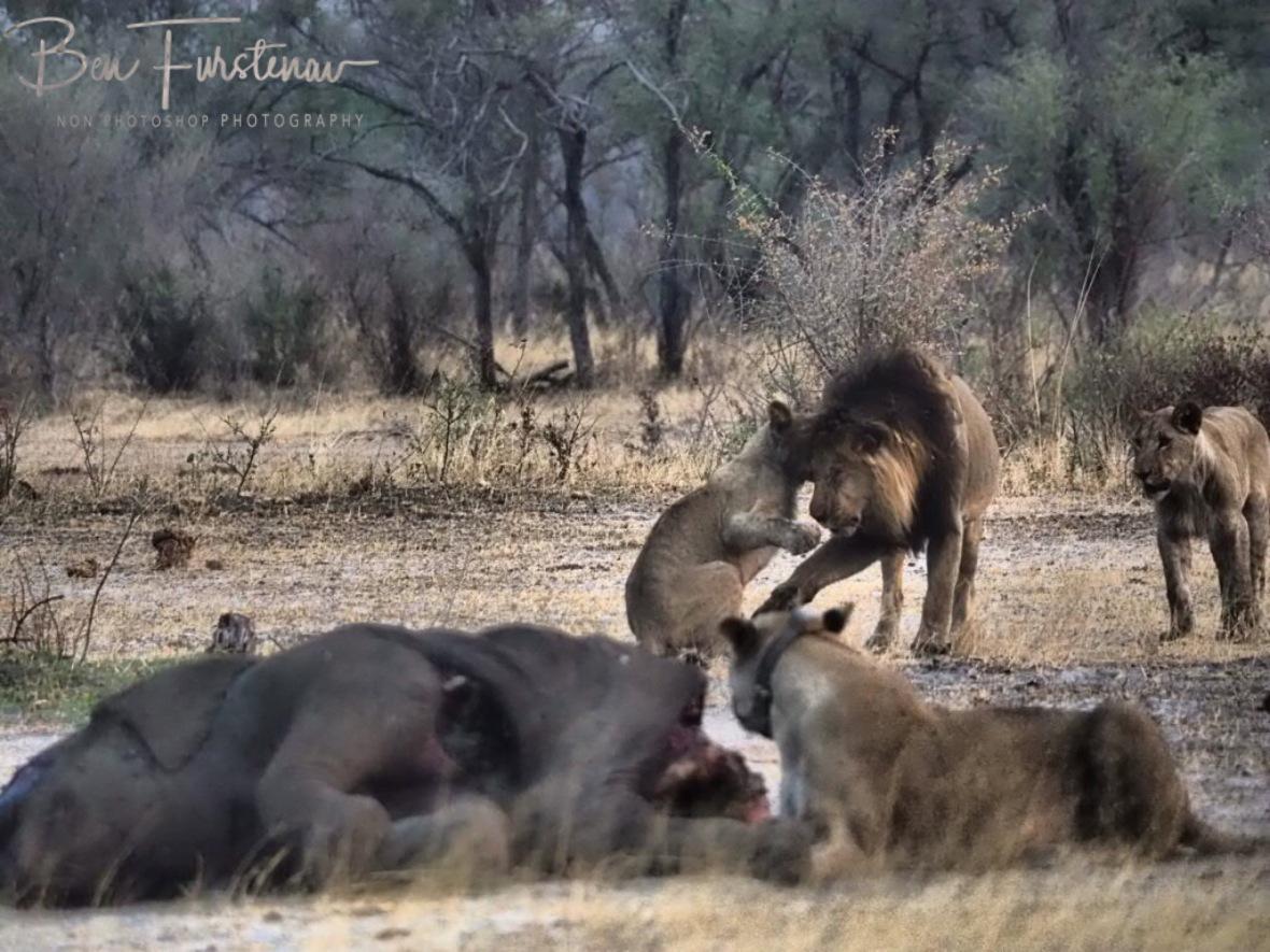 A cute welcome, Khaudum National Park, Namibia