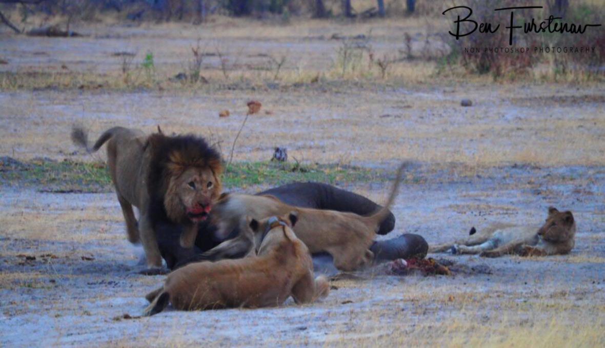 Enough is enough, Khaudum National Park, Namibia