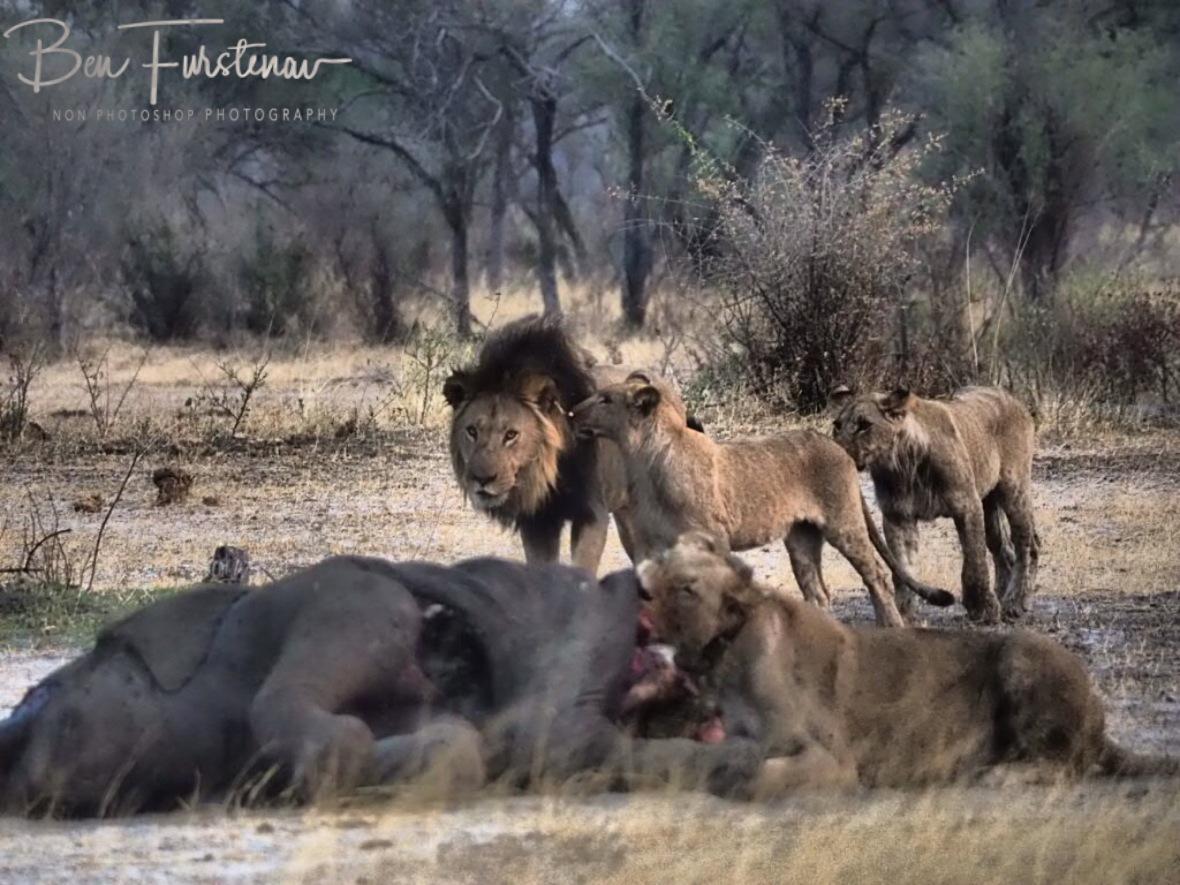 Ok now, that's enough, Khaudum National Park, Namibia