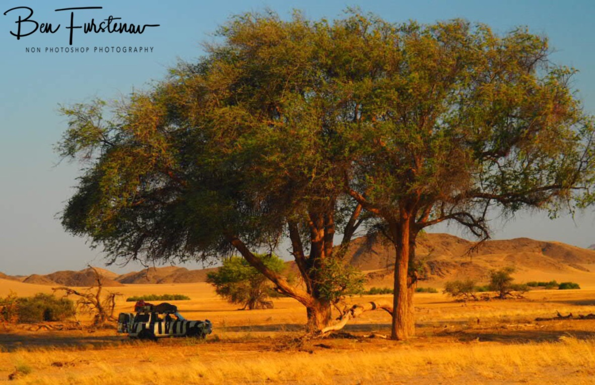 Tall tree shade, Damaraland, Namibia