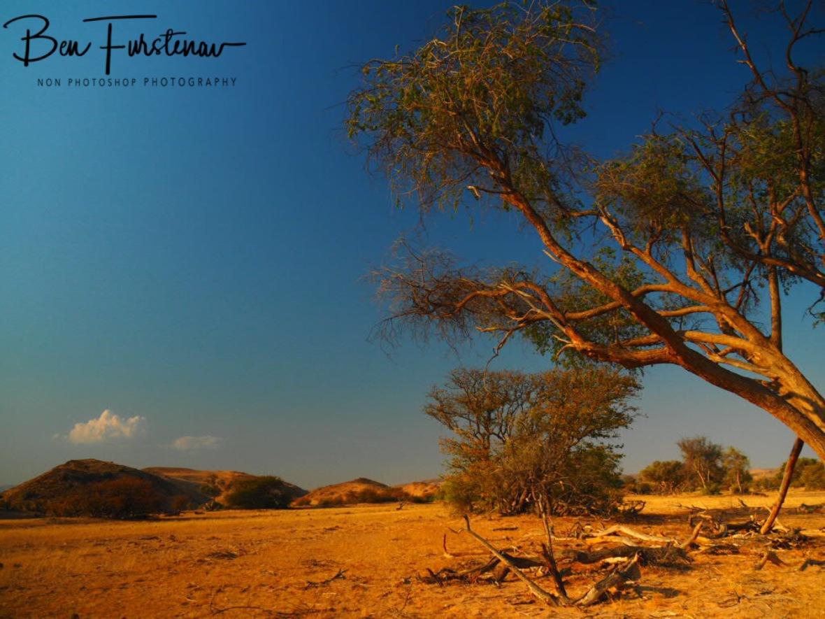 A lush and arid combination, Damaraland, Namibia