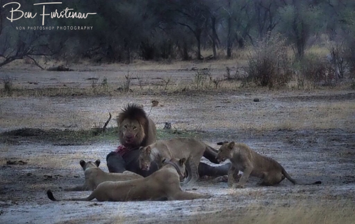 Still too close, Khaudum National Park, Namibia