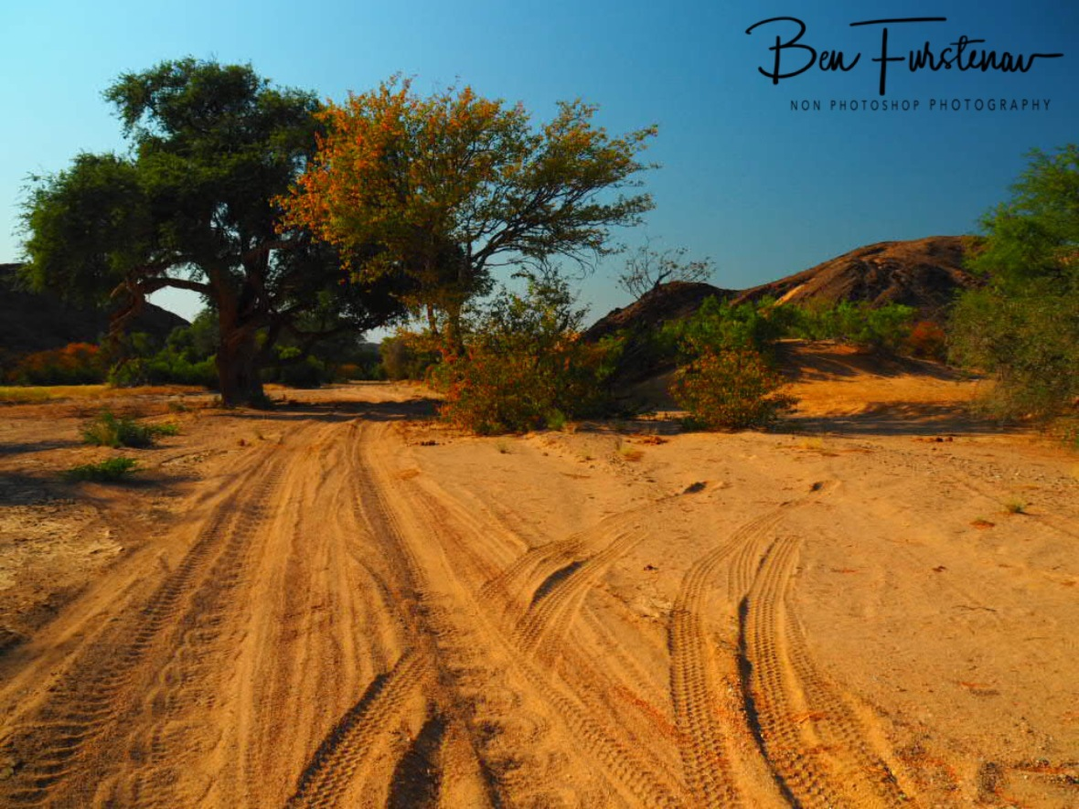 Popular track, Damaraland, Namibia