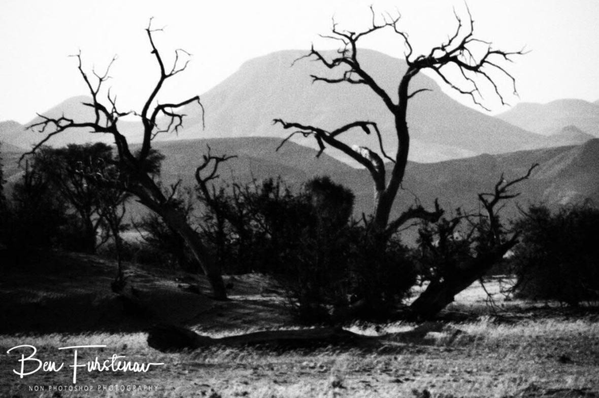 No sign of wildlife, Damaraland, Namibia