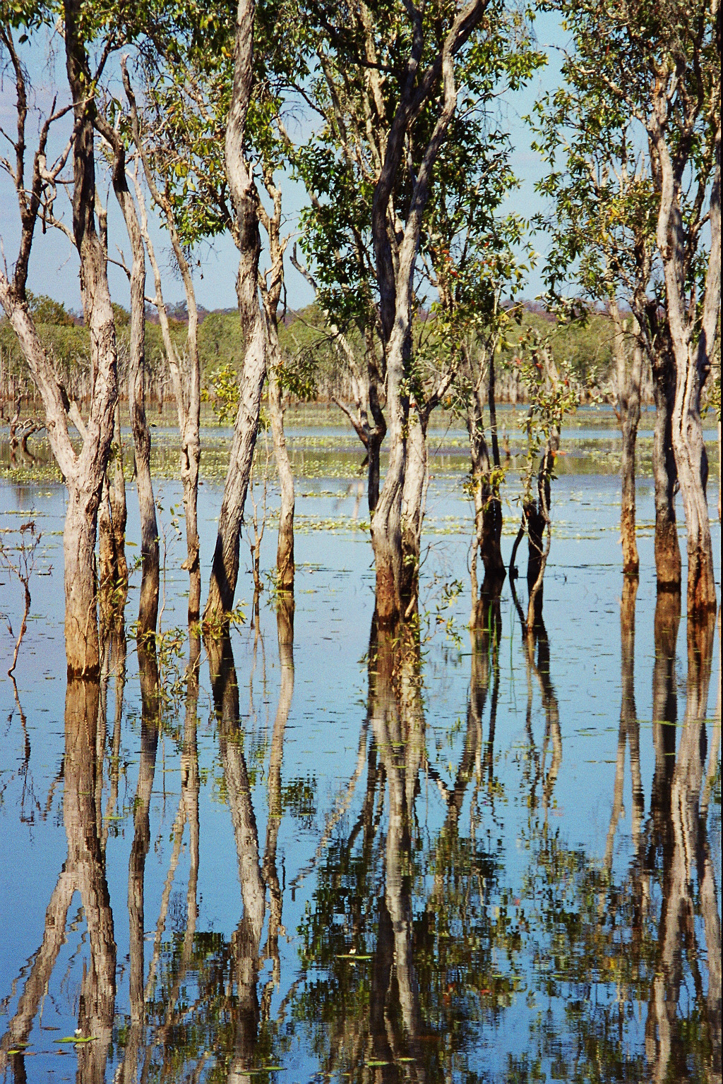 Seasonal floods in Arnheim Land, Kakadu National Park, Northern Territory, Australia