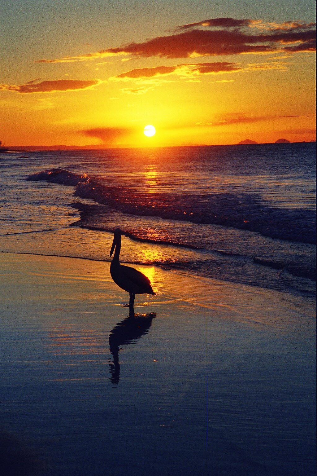 Pelican sunset on Moreton Island, Queensland, Australia