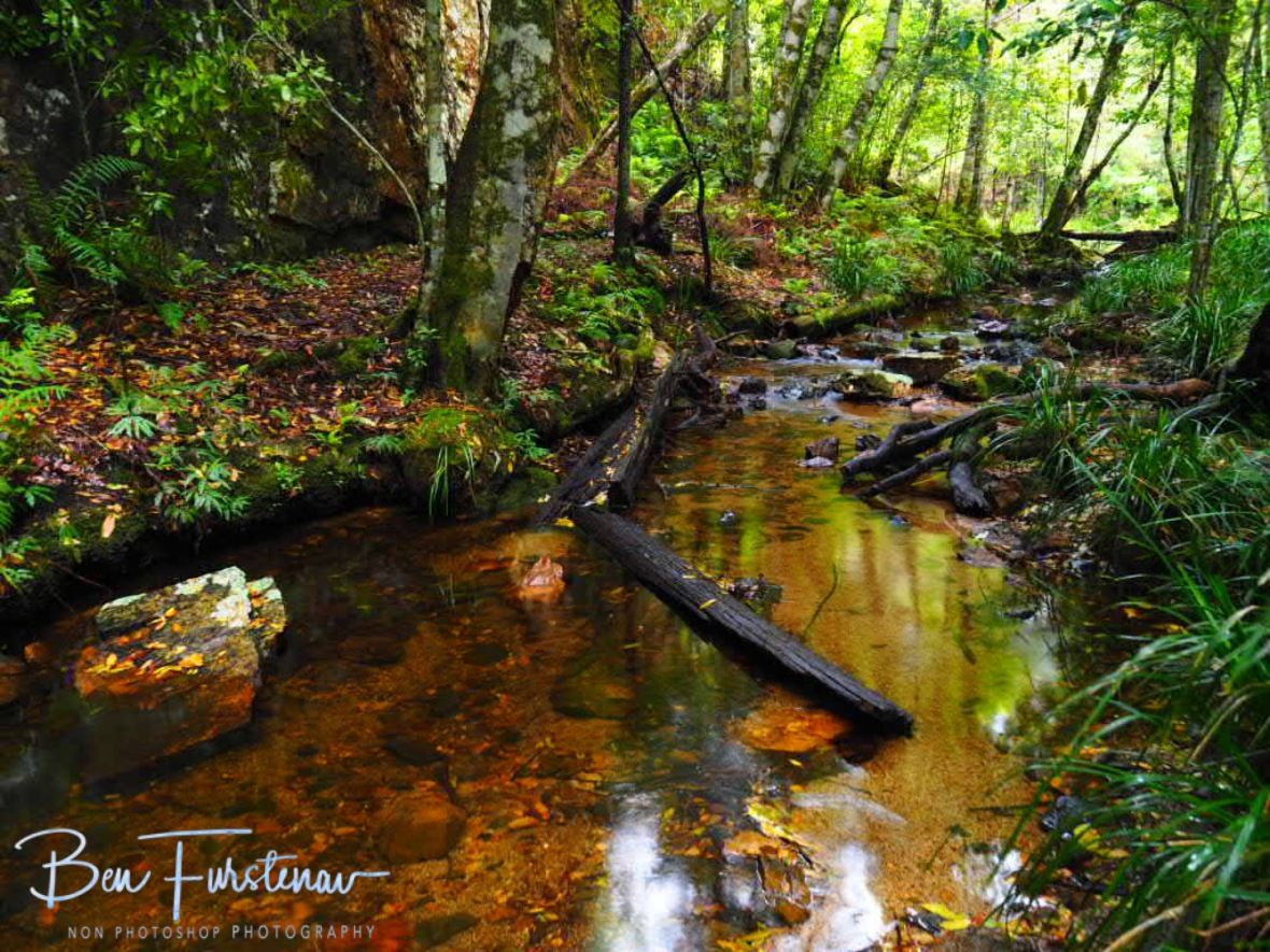 Colourful reflections, Washpool National Park, NSW, Australia