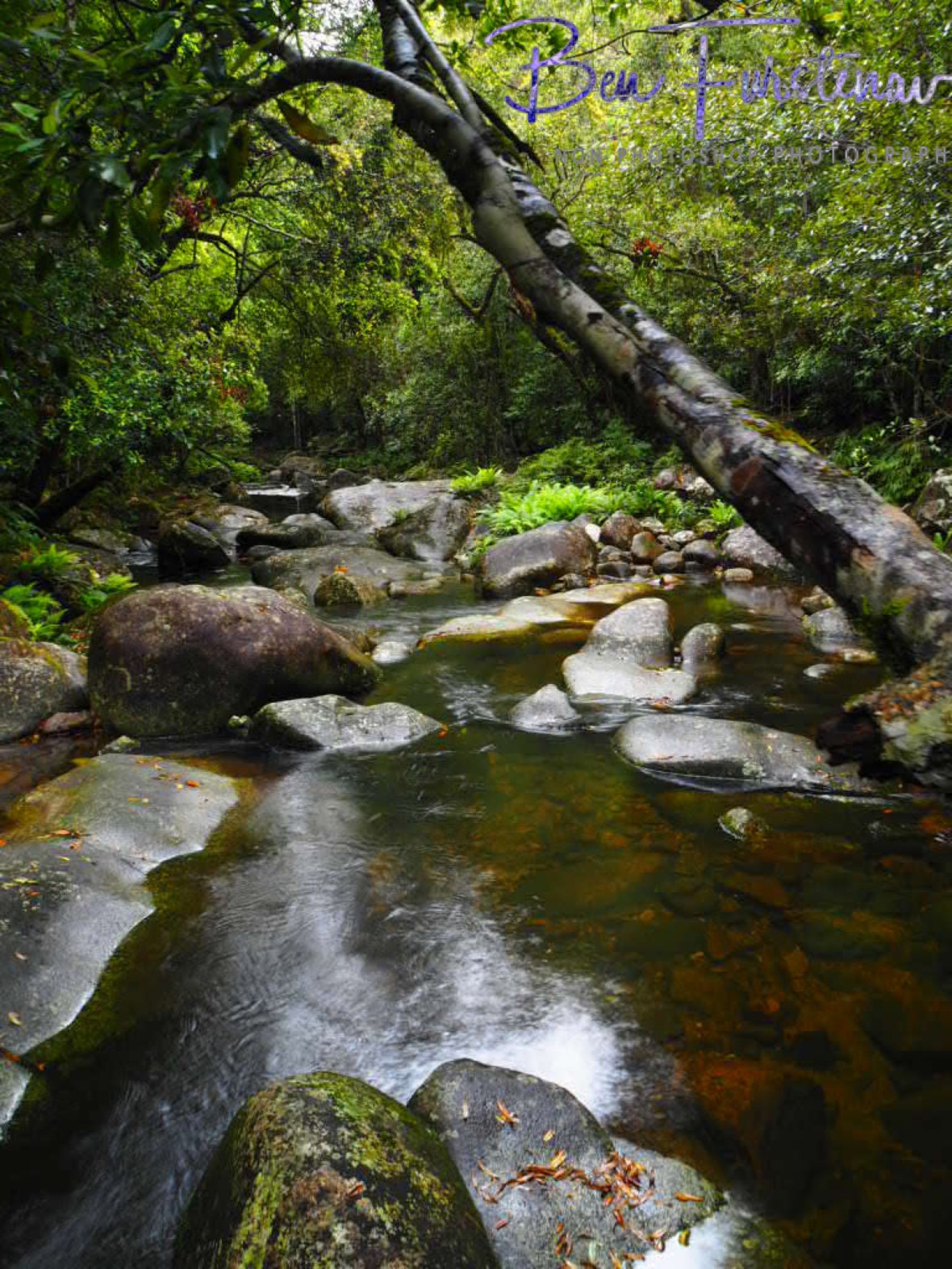 Washpool Creek gentle flow, Washpool National Park, NSW, Australia