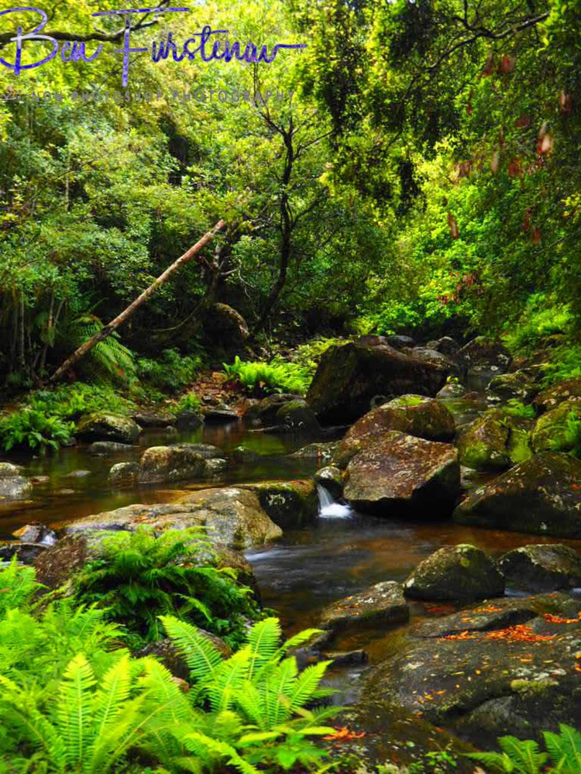 Washpool Creek gently meandering along, Washpool National Park, NSW, Australia