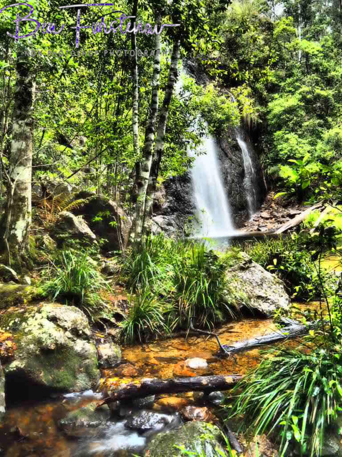 Green surroundings at Boundry Falls, Washpool National Park, NSW, Australia