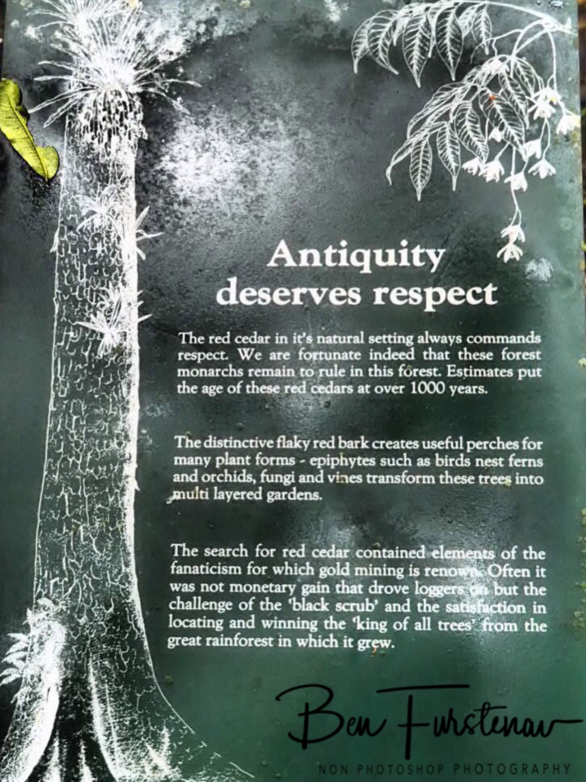 The tree of life, Washpool National Park, NSW, Australia