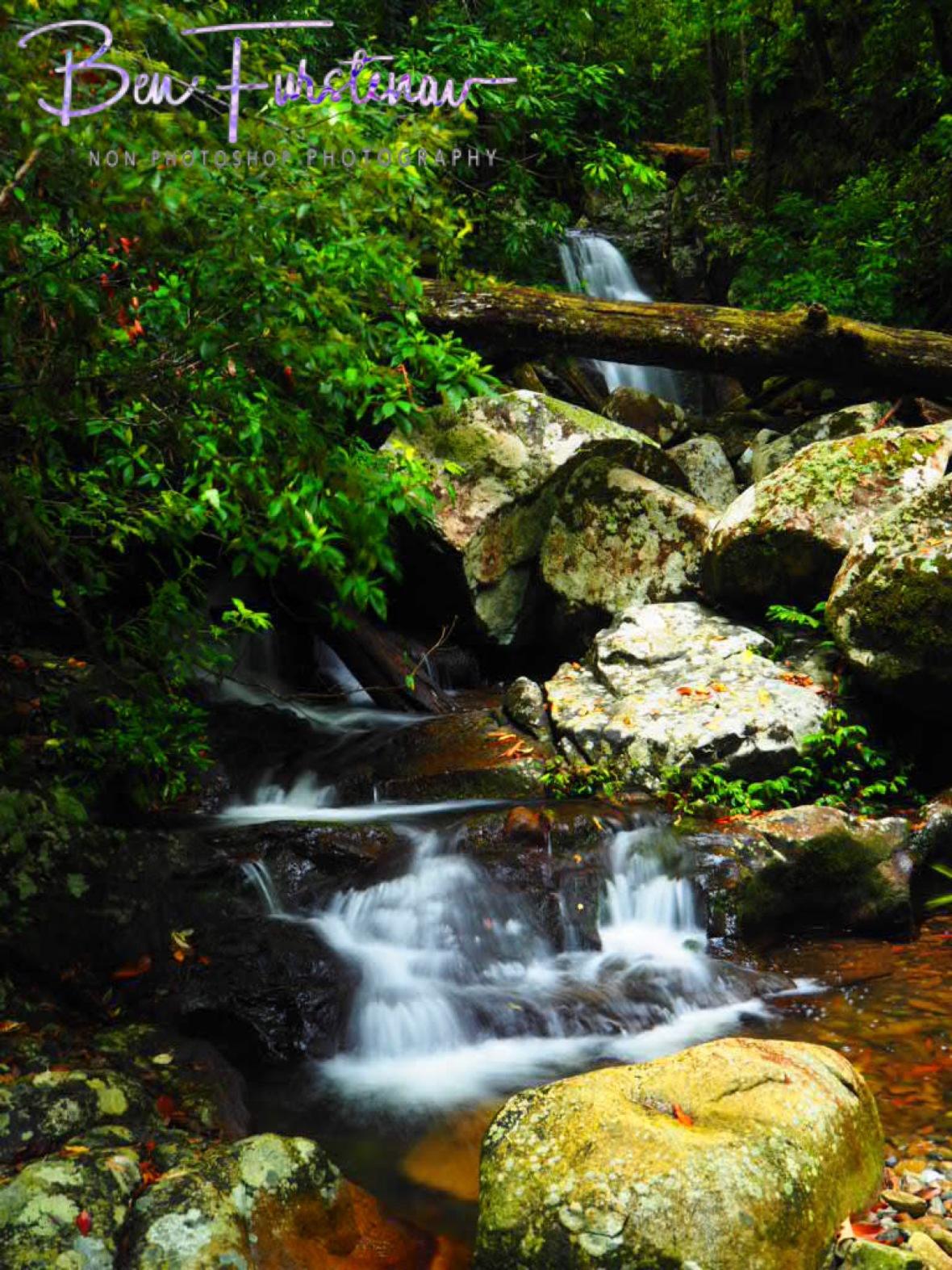 Washed out trees line Washpool Creek, Washpool National Park, NSW, Australia