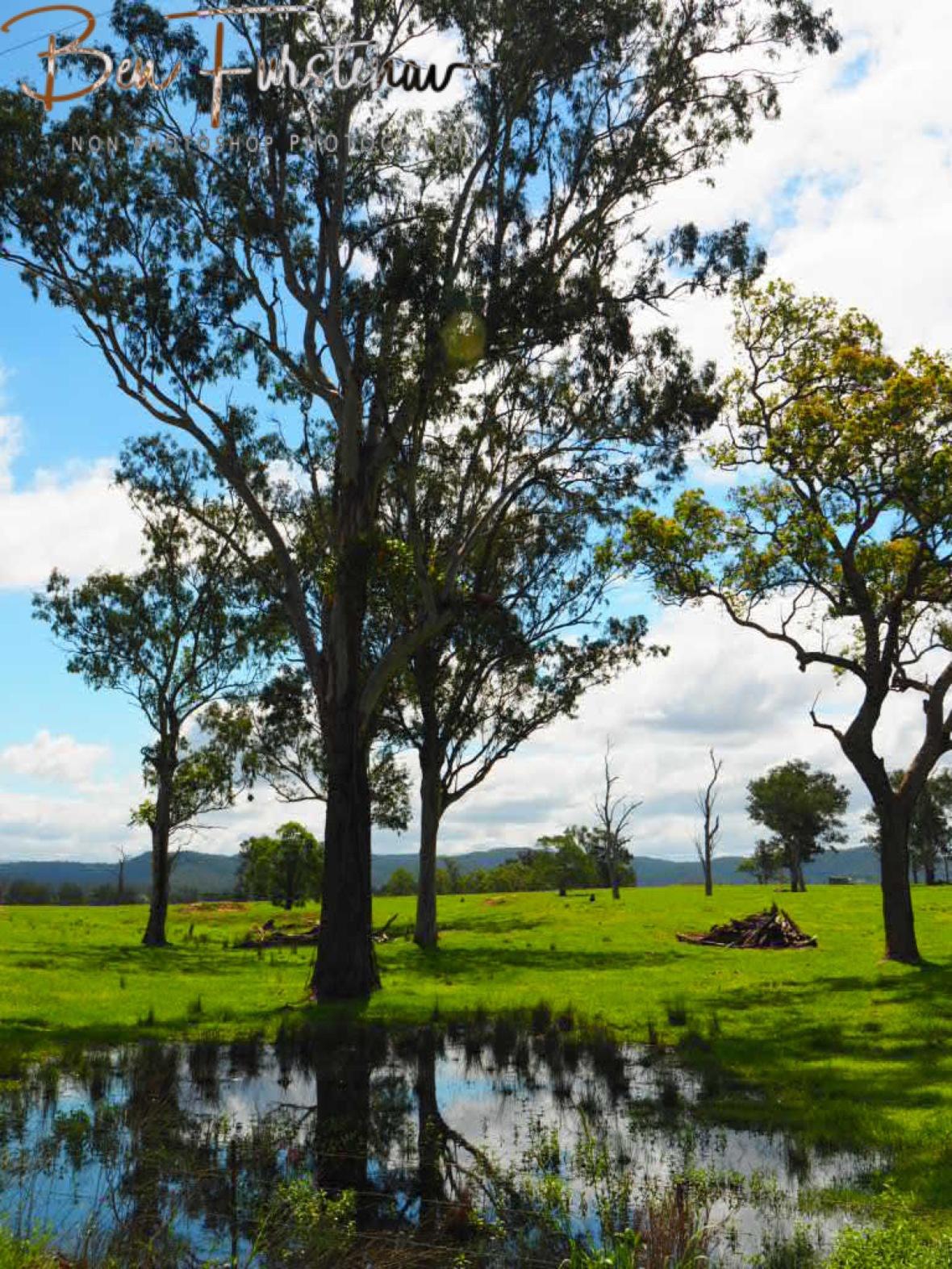 Fresh grazing pastures inland from Grafton, NSW, Australia