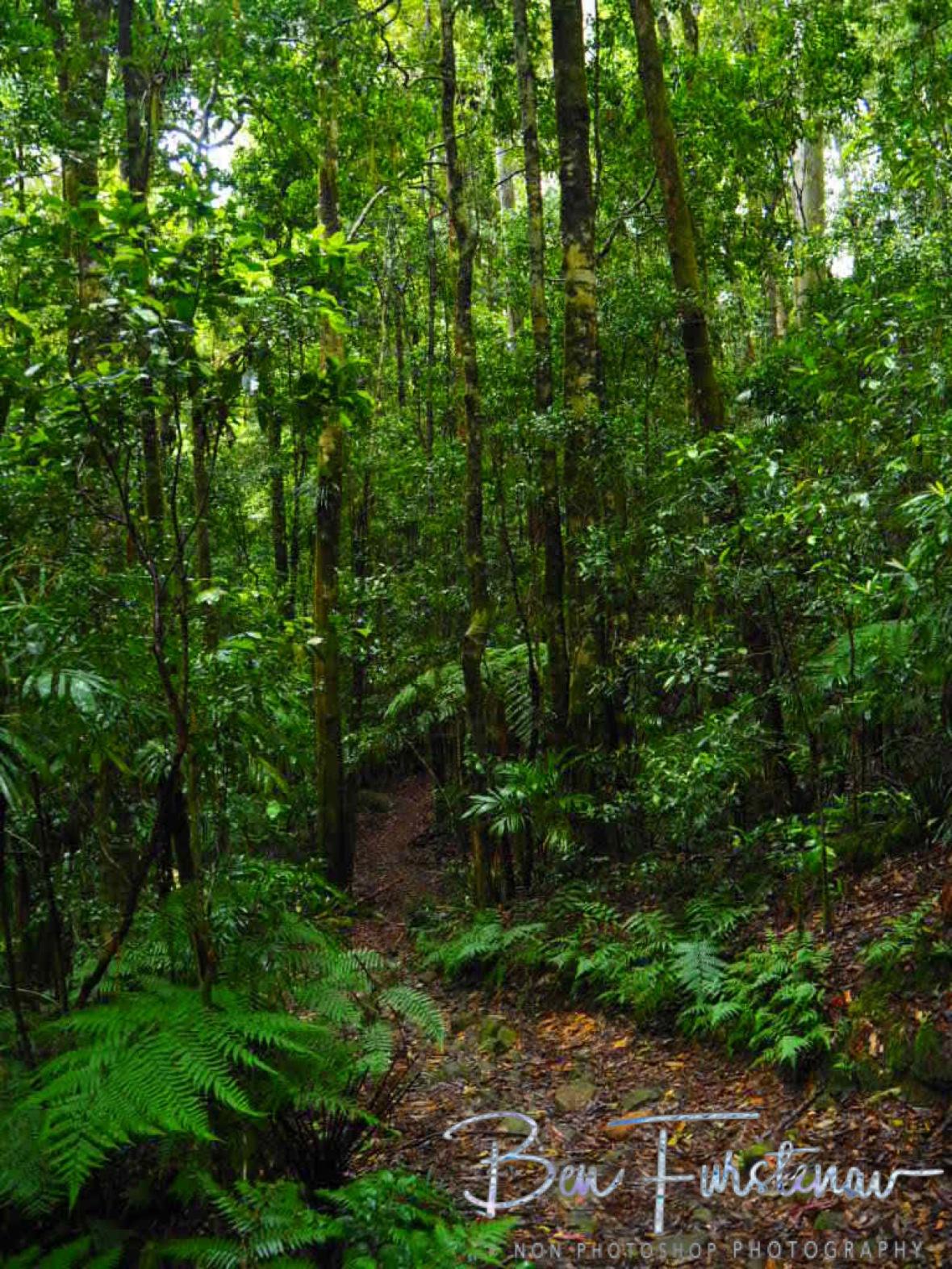 Washpool Creek hiking trail, Washpool National Park, NSW, Australia