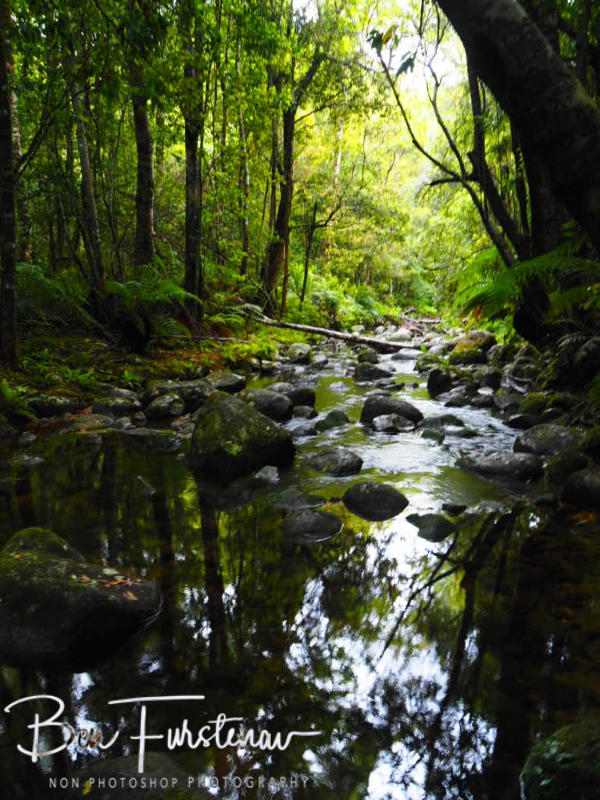 Lush vegetation around Washpool Creek, Washpool National Park, NSW, Australia