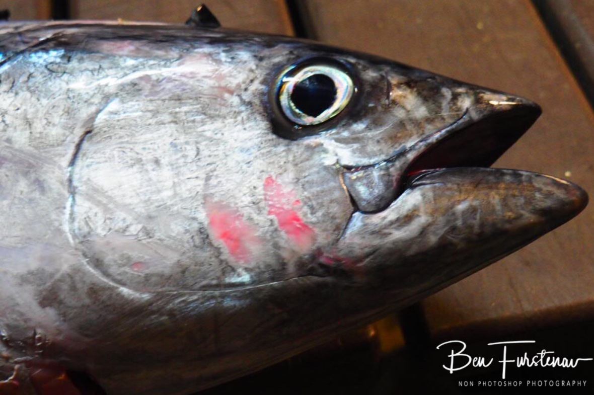 Big tuna eyes, Diggers Beach, New South Wales, Australia