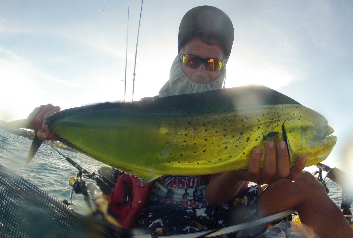 Golden colours of a female Mahi-mahi of Scott's Head, New South Wales, Australia