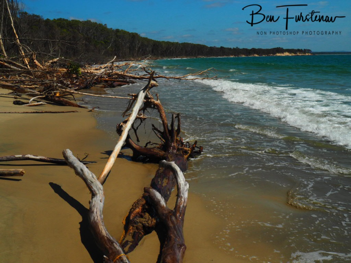Shark Bay wooden coastline, Woody Head, New South Wales, Australia