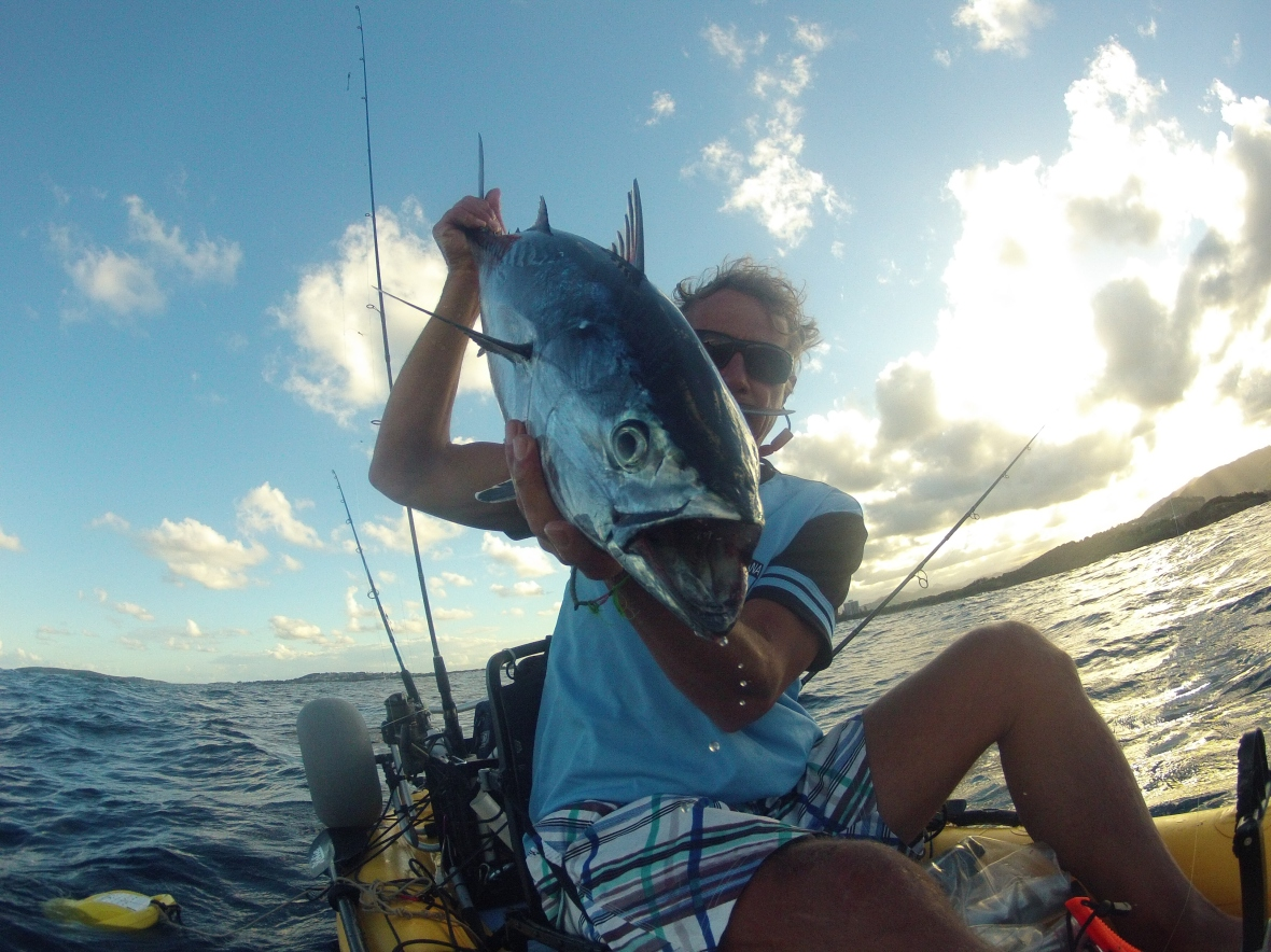 Mack Tuna are speedsters and excite any fisherman, Coffs Coastline, New South Wales, Australia