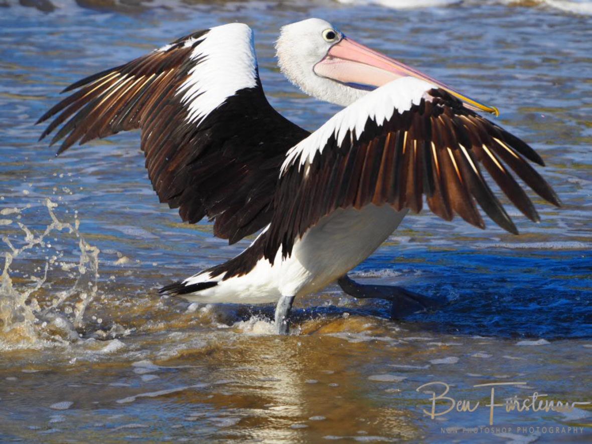 Pelican Catwalk at Woody Head, New South Wales, Australia