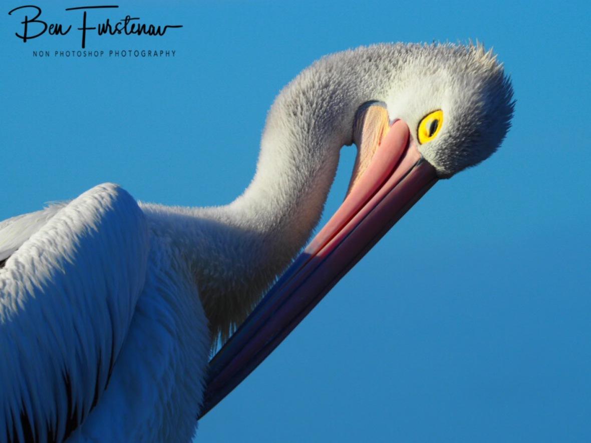 Streaky Beak, Brooms Head, New South Wales, Australia