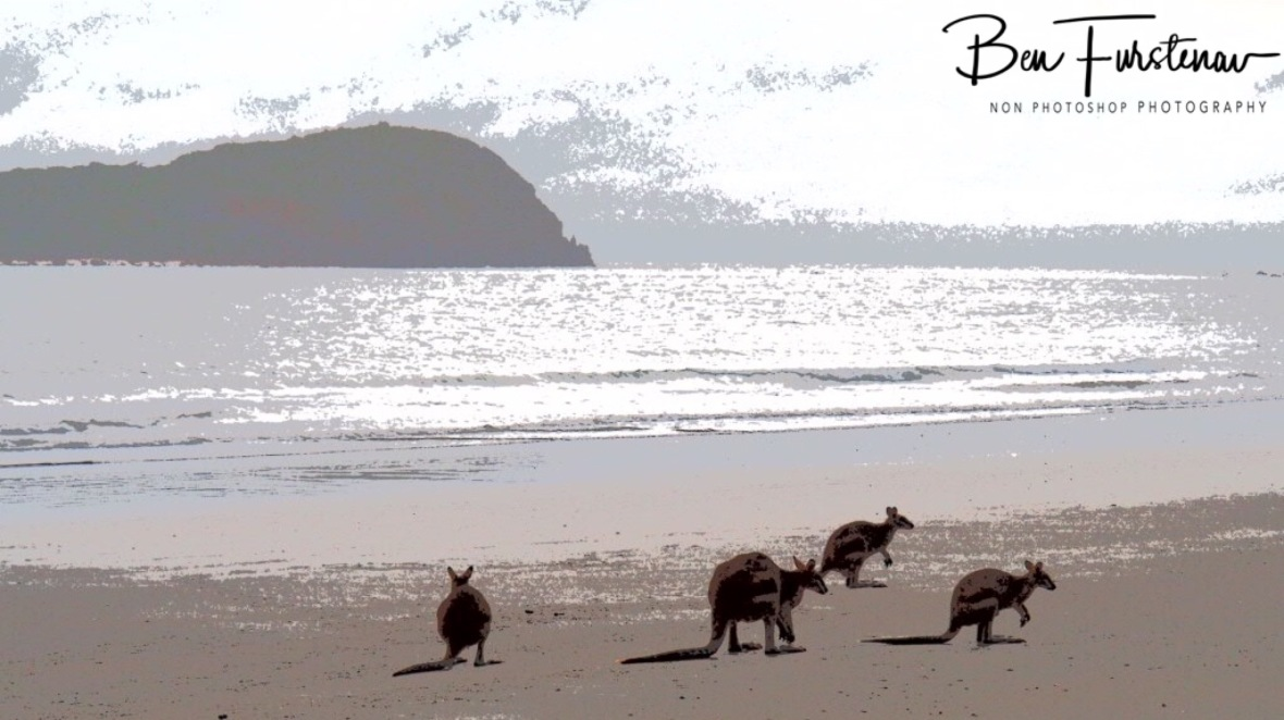 Safety in numbers at Cape Hillsborough, Queensland, Australia