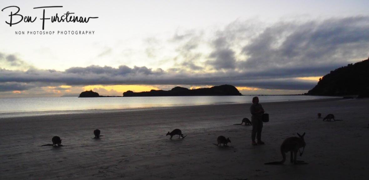Early morning Ranger duties at Cape Hillsborough, Queensland, Australia