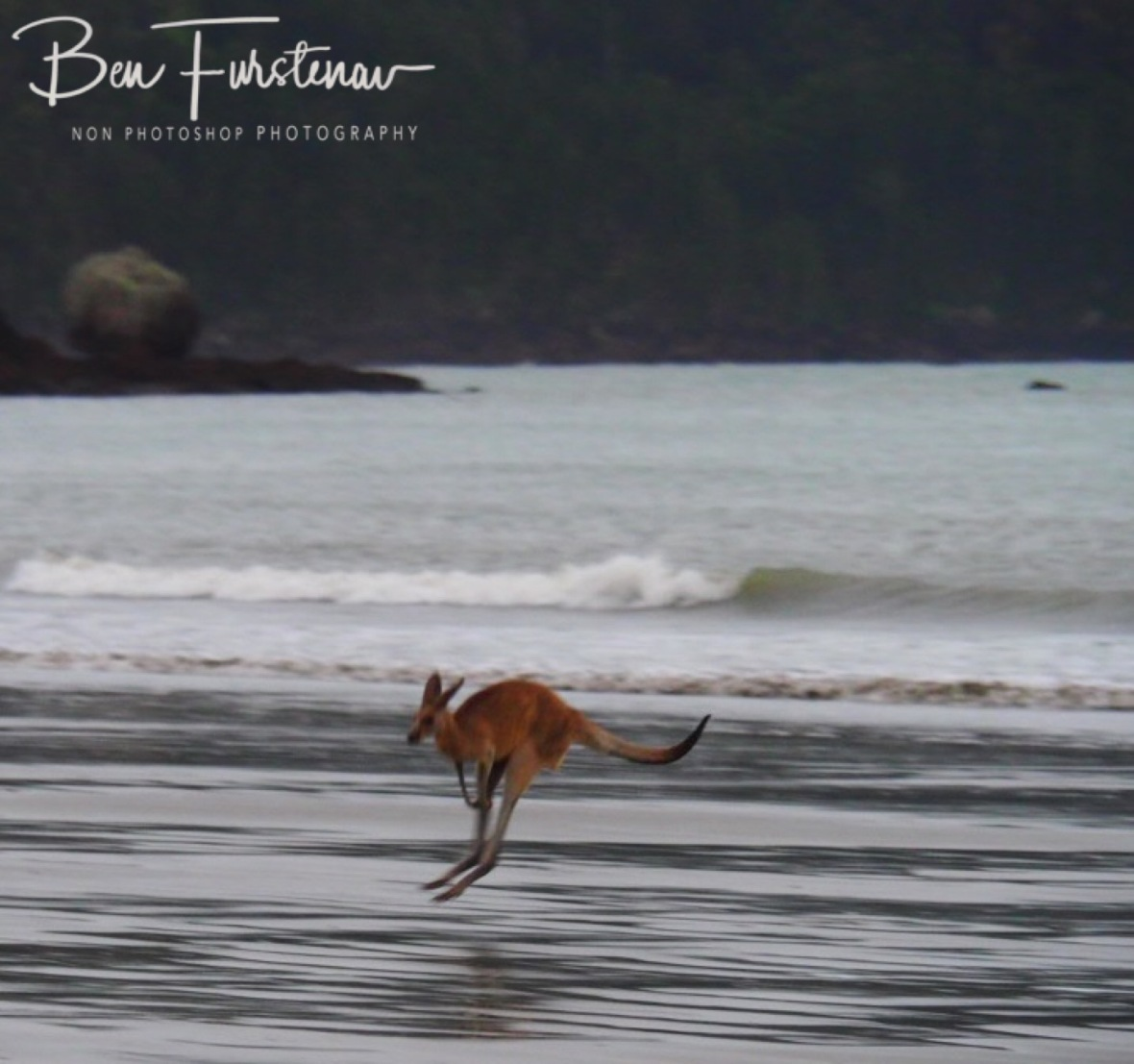 Skipping in perfect locomotion at Cape Hillsborough, Queensland, Australia