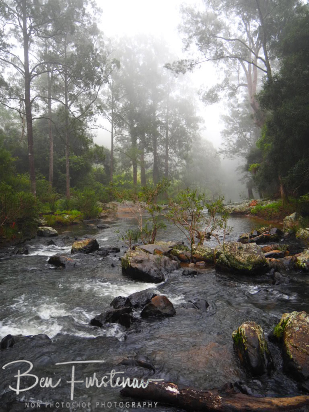 Forest, river and fog at Eungalla National Park, Queensland, Australia