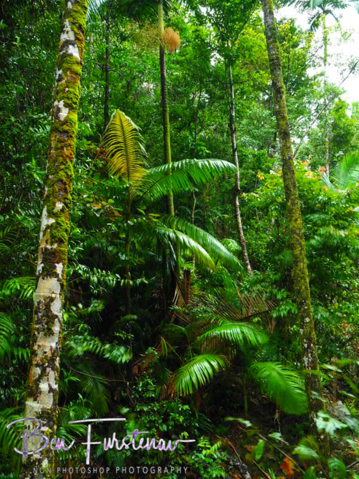 Lush foliage at Finch Hatton Gorge, Eungalla National Park, Queensland, Australia