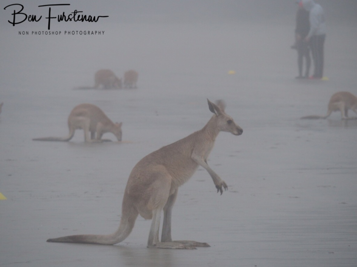 Thick fog on the beach at Cape Hillsborough, Queensland, Australia