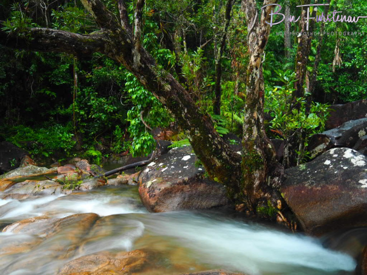 Colourful dreamy at Finch Hatton Gorge, Eungalla National Park, Queensland, Australia