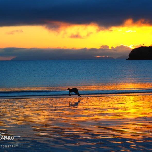 Golden reflections at Cape Hillsborough, Queensland, Australia