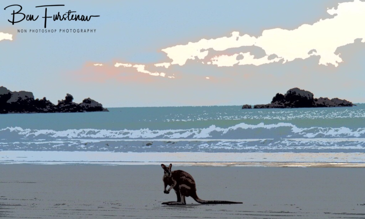 Waiting for the mob at Cape Hillsborough, Queensland, Australia