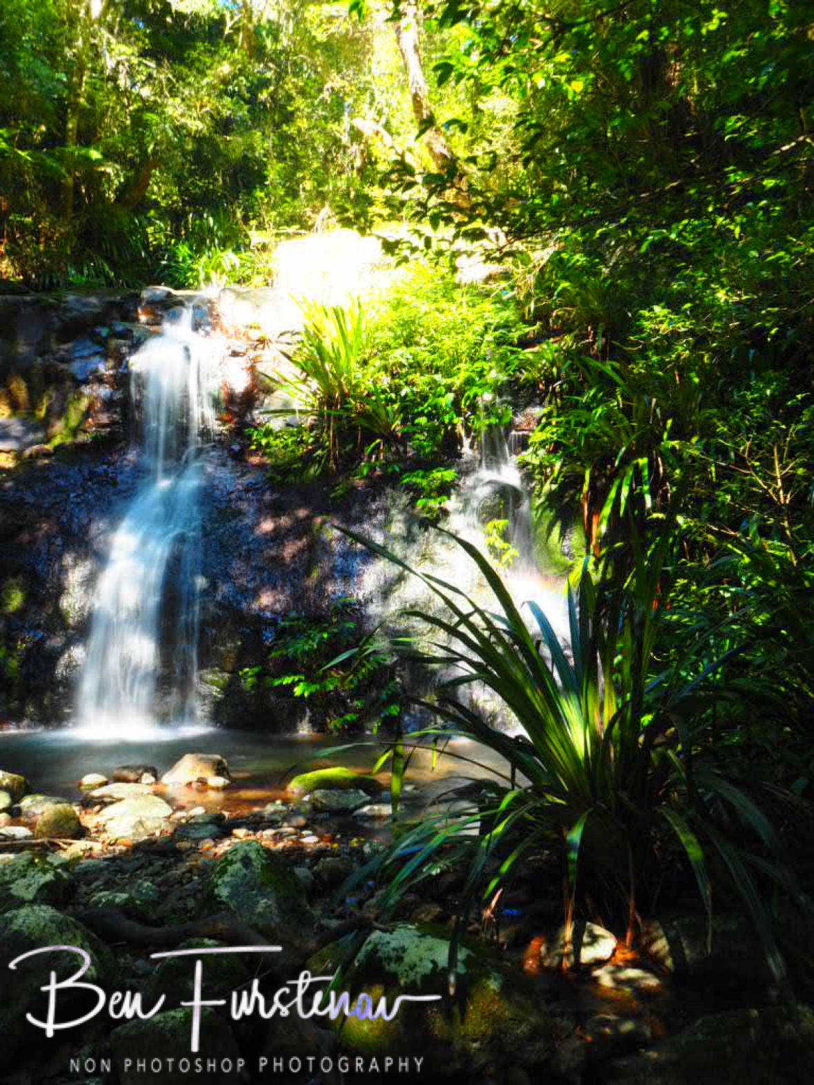 Sunny cascades and greens at Lamington National Park, Queensland, Australia