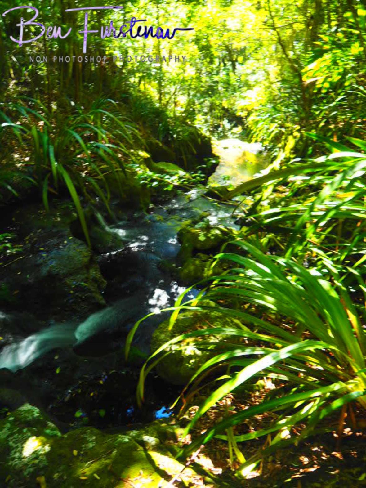 Bright display at Lamington National Park, Queensland, Australia
