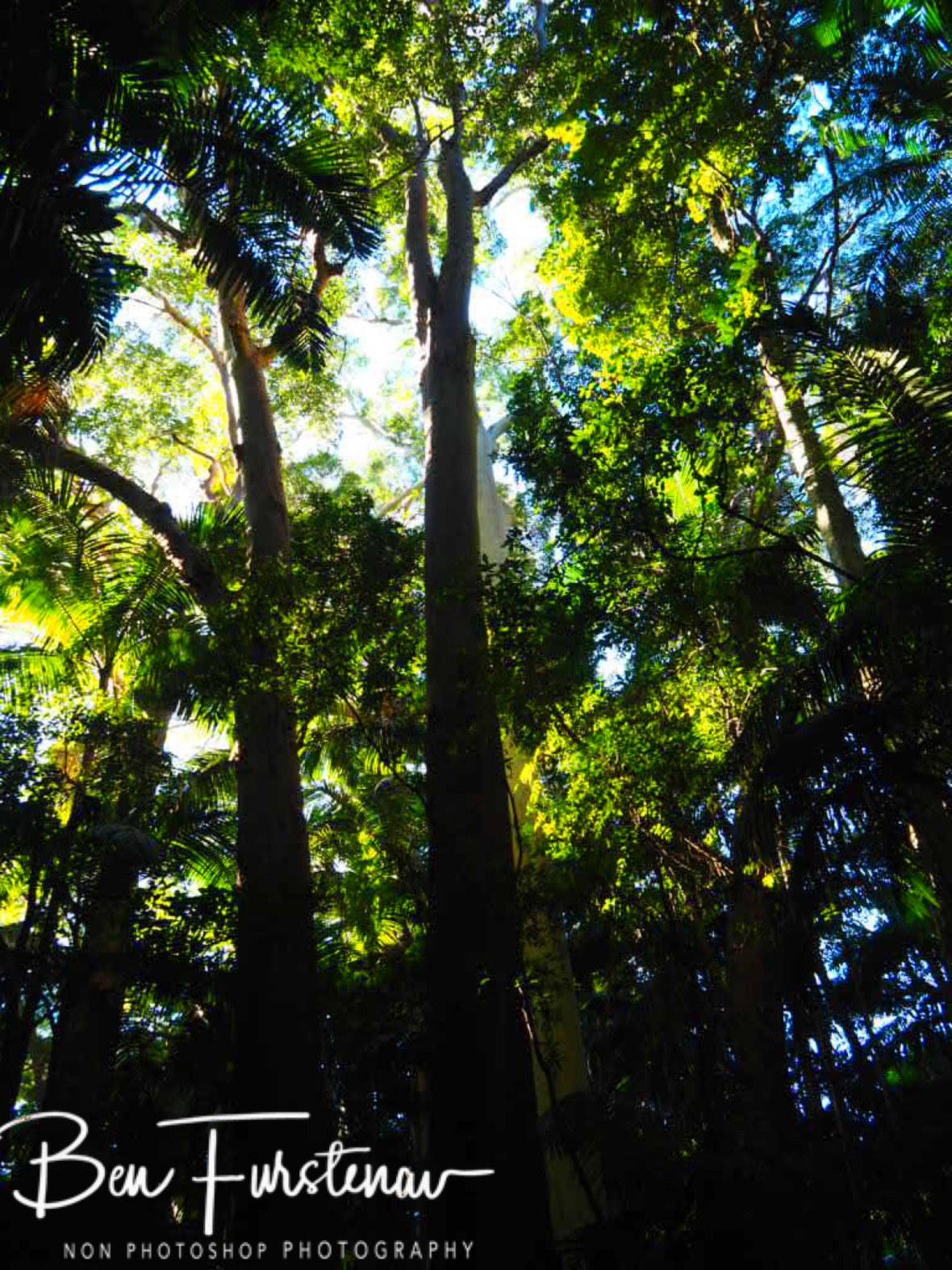 Dense forest at Lamington National Park, Queensland, Australia