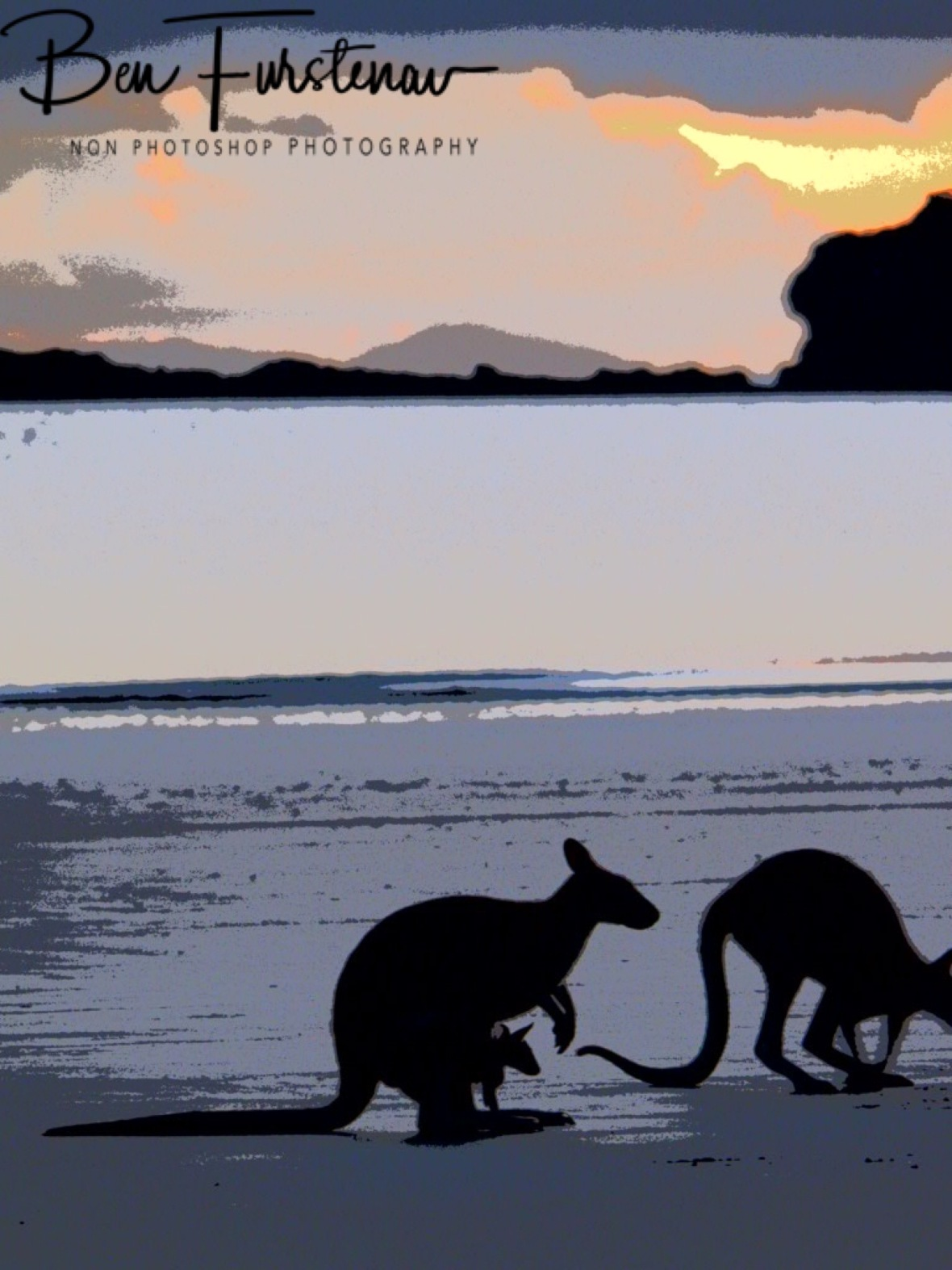 Even Joey gets up for early morning breakfast at Cape Hillsborough, Queensland, Australia